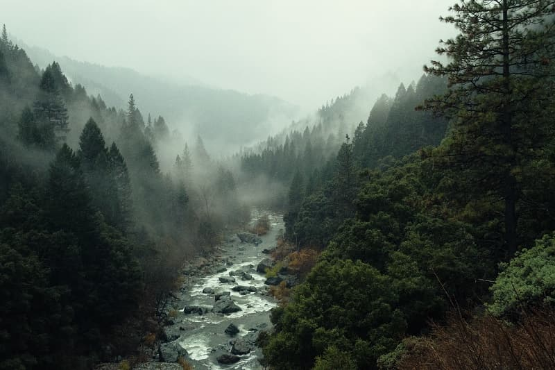 River With Evergreens