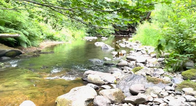 Whittaker Creek