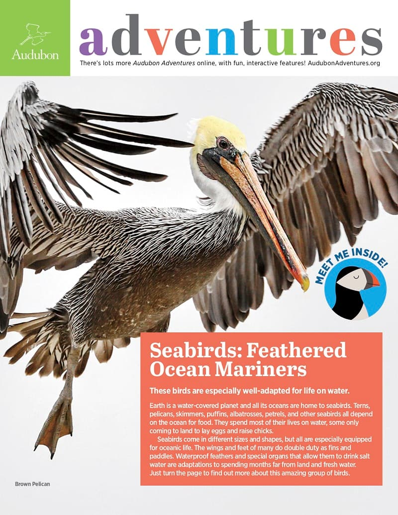aud adventures seabirds