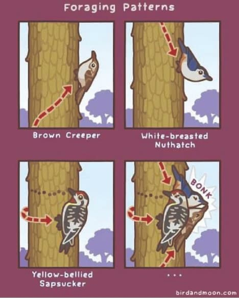 Foraging Patterns Birds On Trees