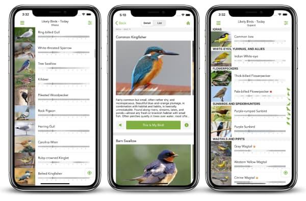 EBird Mobile App